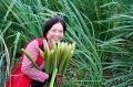 新北市女農率先響應友善耕作 7公頃茭白筍收成囉!