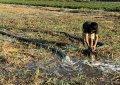 雲林縣農牧媒合再進化 放流水試灌優先行