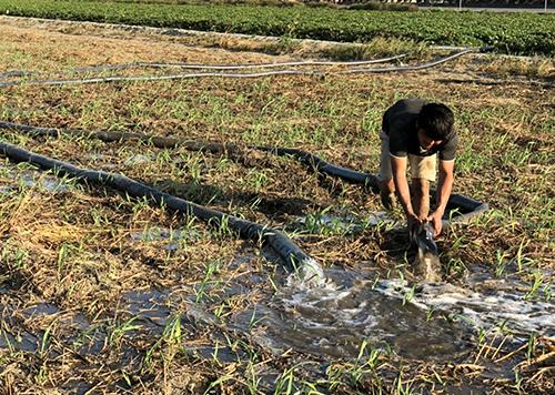 雲林縣為加速削減河川污染量,環保局主動出擊,媒合麥寮鄉月光下友善農場之小麥田,11月份進行放流水試灌小麥田情形。