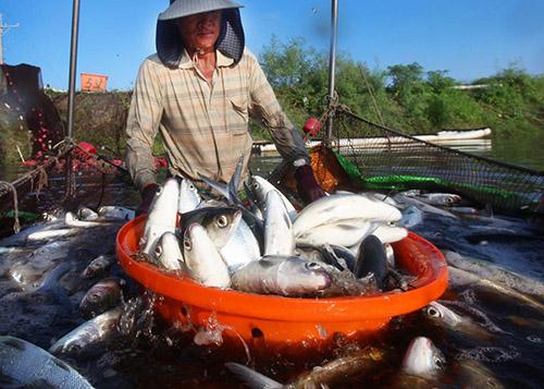 嘉義縣優質農漁產將於12月1-2日直送台北希望廣場