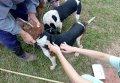 為避免狂犬病傳播 請民眾攜家犬貓定期施打疫苗