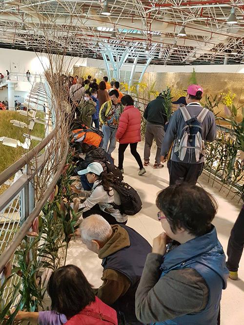 民眾參與插花佈置活動