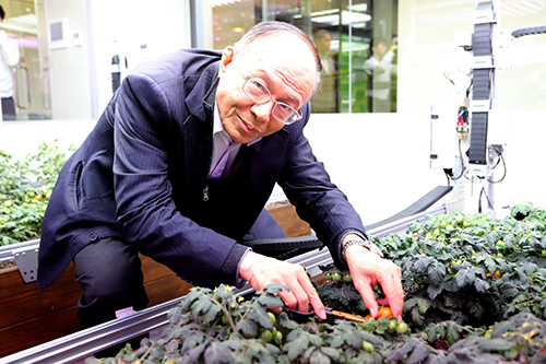 南華大學智能環控植物工場揭牌,林聰明校長採收番茄。