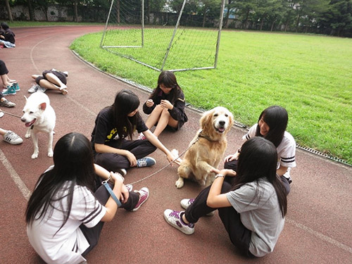 同學與校犬和樂相處
