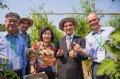 「台灣蔬菜品種觀摩會」蔬菜種子種苗前進新南向