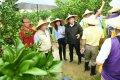 台南市長黃偉哲:別讓政治訂單破壞麻豆文旦行情