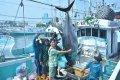 2019黑鮪魚季第一鮪確認 4/20熱鬧拍賣