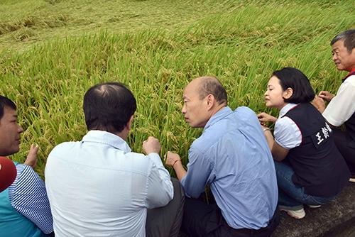 水稻農損 高雄市長韓國瑜:全力協助降低農友損失