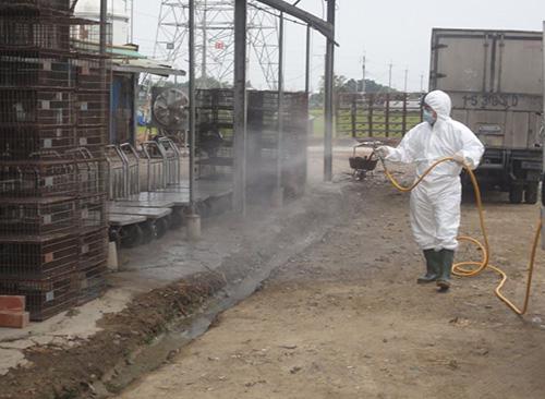 國內禽流感疫情頻傳,嘉義縣呼籲強化禽場安全