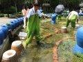 樹林高中師生改造噴水池 生態池成昆蟲新棲地