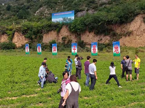 黨參種子基地(張汶寧攝)