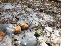 台中市府提醒0812豪雨農作物現金救助區農民儘速申請
