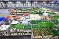 借鏡全球最大鮮花拍賣市場 台中力推批發市場自動化
