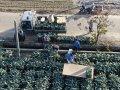 嘉義縣青農改裝田間搬運農機 青花菜採收效能快四倍