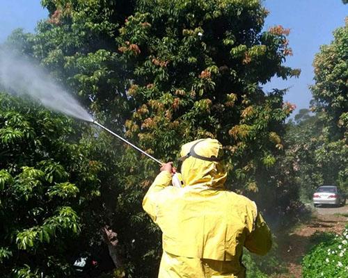 植物防疫作戰!荔枝椿象產卵季 新竹市揪農友疫起來