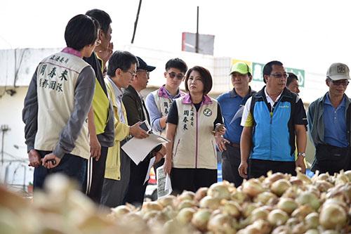 洋蔥病害導致產量受損 屏東農民盼農委會現金救助