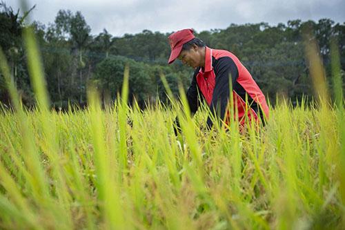 新竹市府與桃改場攜手農友共同為水稻健康把關
