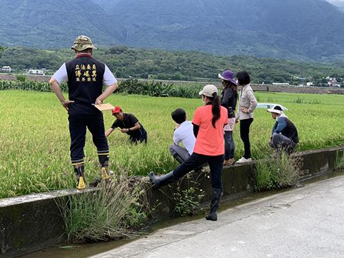 花蓮水稻「空包彈」 縣長徐榛蔚:已公告災害救助