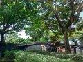 新北市古蹟x植栽專案小組成立,共同打造「無褐家園」
