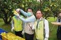 台南市長黃偉哲關心柚農產銷 宣布8月19日啟動大果收購
