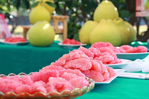 台南紅柚鮮採上市 市長黃偉哲歡迎全國鄉親及早訂購