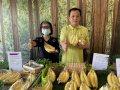 屏東香蕉快閃太平洋百貨成「蕉點」 多元行銷穩定收益