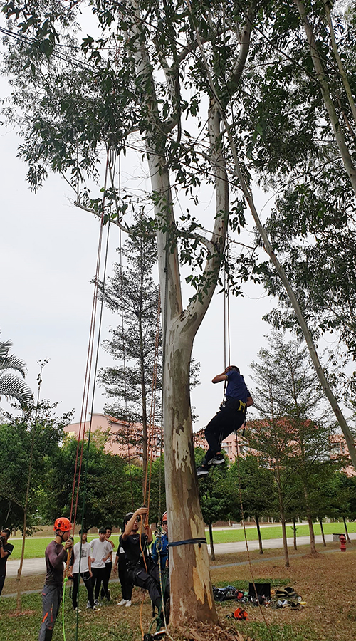 南華大學建景系舉辦攀樹體驗活動,學生參與踴躍。