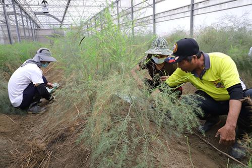 農會與雲林監獄合作 受刑人投入農務紓緩農業缺工