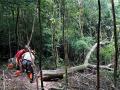 推動永續森林 台北市大地處推薦20種坡地適生樹種