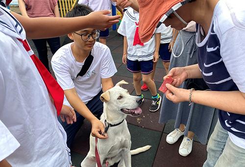 新北動保推廣適合伴讀犬貓入校 開設校園犬系列課程