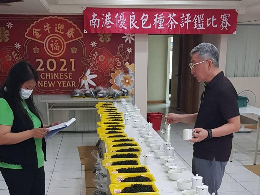 現在喝南港春季包種茶比賽茶正是時候