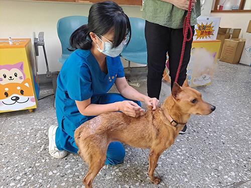 飼主勿拿人用藥給寵物服用 動保處:易造成肝腎損傷