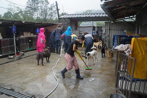 疫情降級不大意 新北動保助民間動物收容所環境清消