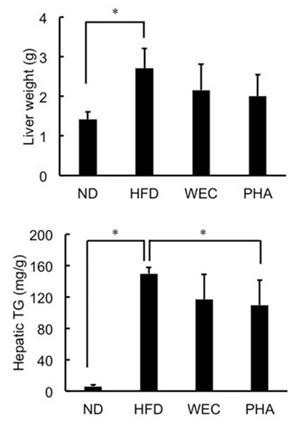 天然綠藻~脂肪肝保健新選擇 最新日本動物實驗研究顯示綠藻能保護肝臟機能 預防非酒精性脂肪肝!