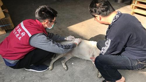 新北塭仔圳重劃區搬遷 84隻遊蕩犬成為廠家犬