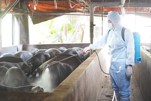 新北啟動萬人區域聯防 杜絕非洲豬瘟肉製品入侵